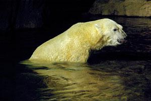 zoo02.jpg