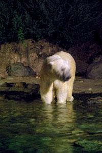 zoo03.jpg