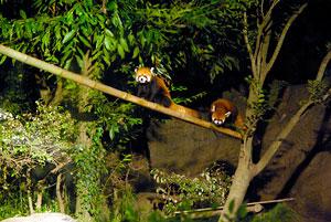 zoo04.jpg